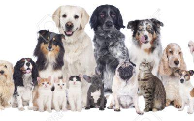 Stage d'initiation  à la Communication Animale  Samedi 26 & dimanche 27 juin 2021  Grasse (06)